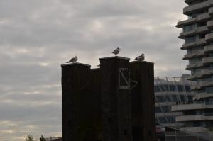 Hafencity Hamburg Hafen Möwen